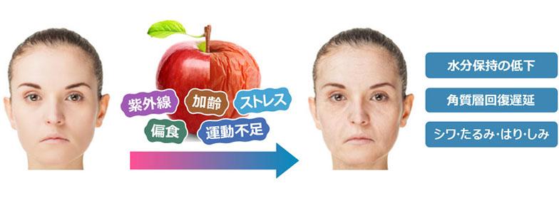 肌の老化について