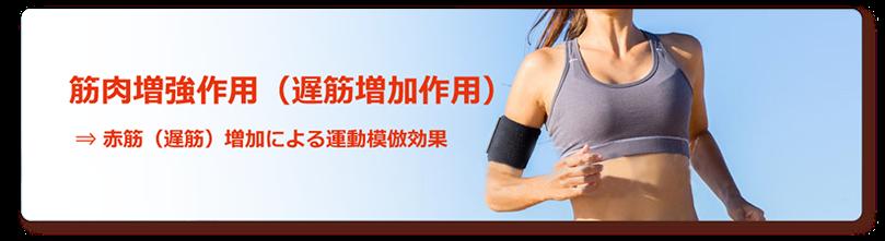 筋肉増強作用